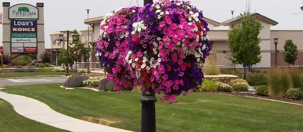 Pink, purple and white flowers adorn a street lamp in scenic Clinton City.